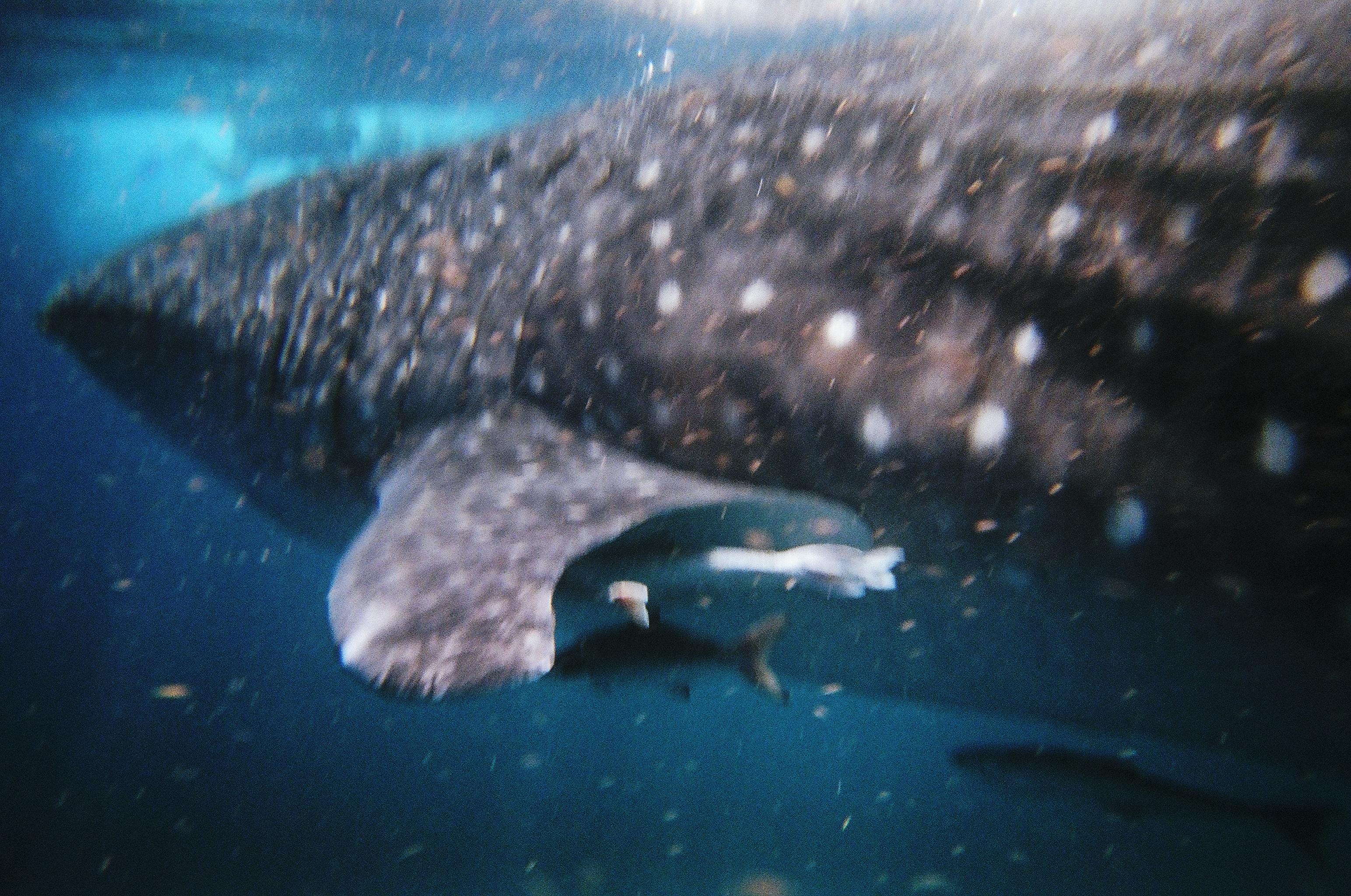Fish That Swim Alongside Sharks