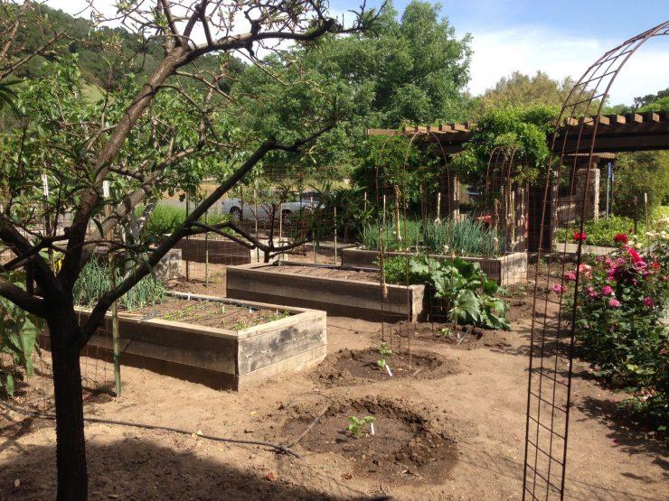 Garden onsite at Robert Sinskey Vineyards in Napa