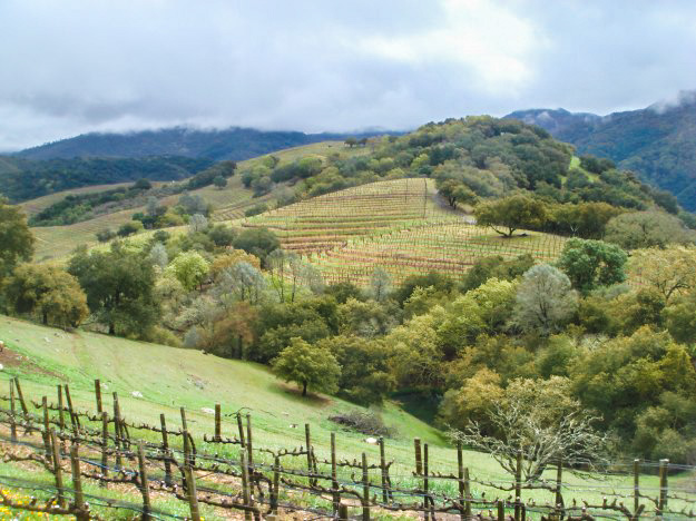 Vineyards of Napa Valley