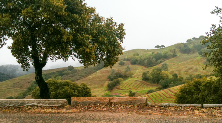 One Day in Napa: Rolling hills of vineyards, world-class wines, and decadent cuisine.