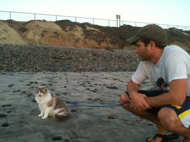 Walking a Cat on a Leash at the Beach.
