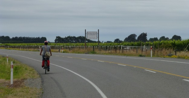 Marlborough Wineries Bike Trail: Heading to the next winery. Sometimes the roads were dirt and sometimes they were nicely paved like this one.