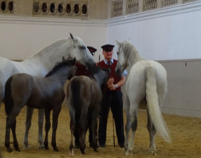 The trainers and Lipizzaner horses seemed to have a very close relationship.