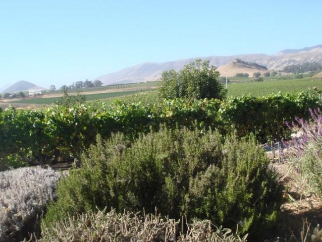 Top Romantic Getaways in California: Wine country scenery in San Luis Obispo.