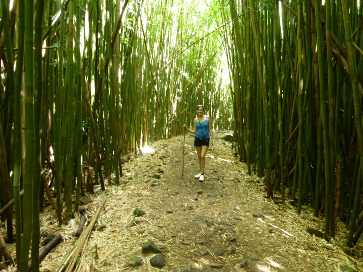 Bamboo forest along the Pipiwai Trail on the Road to Hana.
