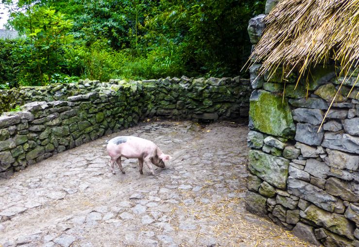 A pig, just one of the farm animals you can see at Bunratty Castle.