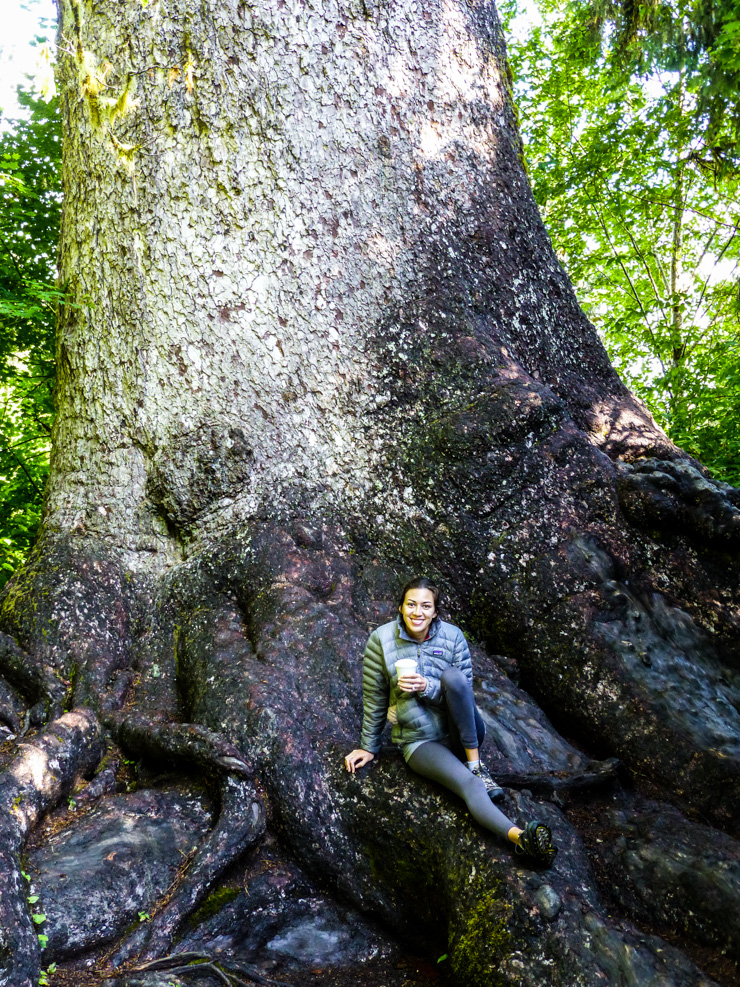 Hanging out on the massive roots of the World's Largest Spruce Tree.