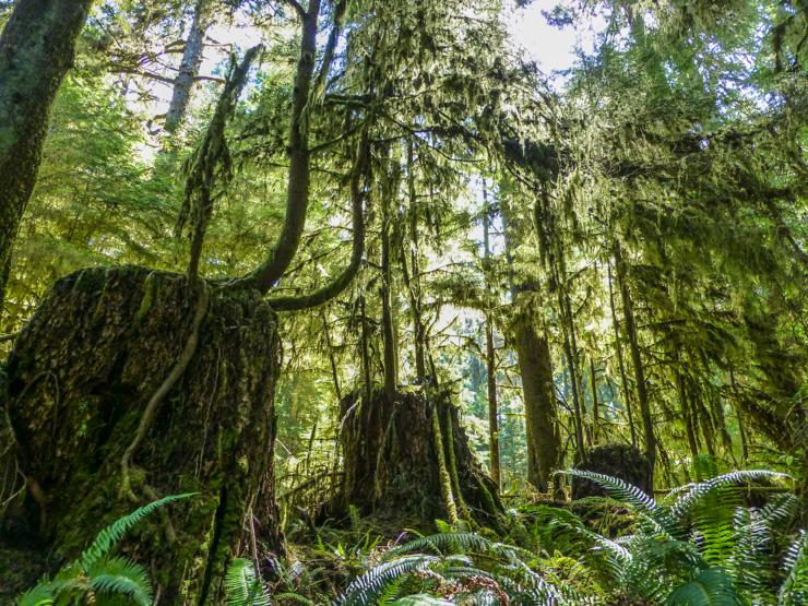 Washington Rain Forest