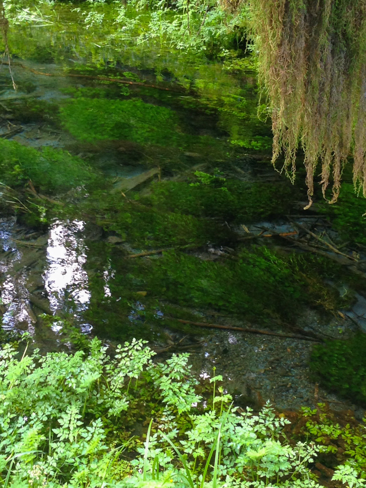 The water was so clear along the Spruce Nature Trail that I could perfectly see the plants beneath the surface.