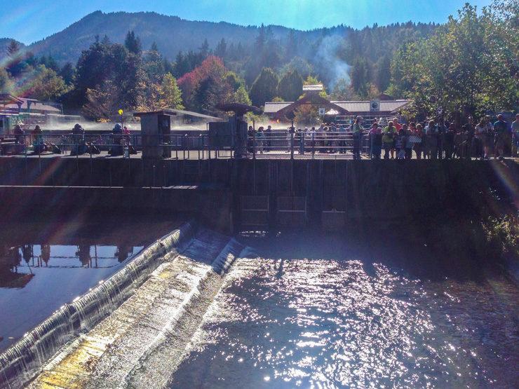 Issaquah Salmon Hatchery