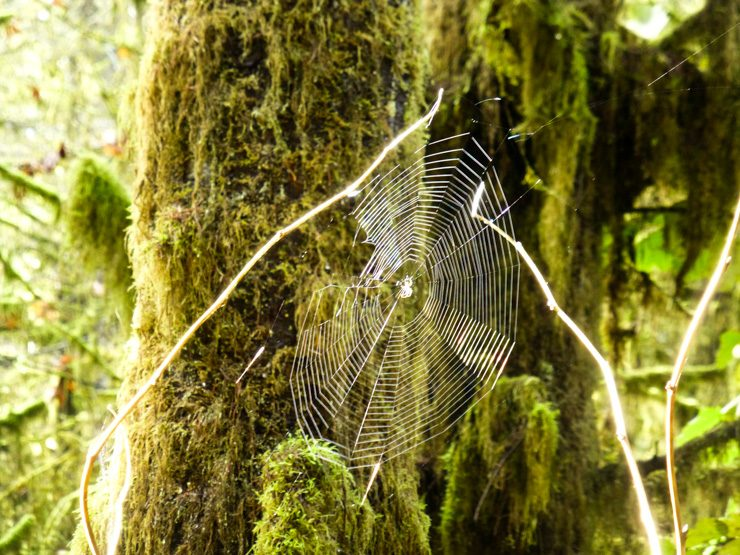 Ooh, such big spider webs to spot while hiking in Washington.