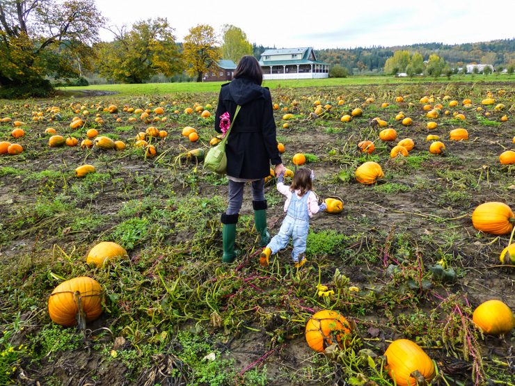Pumpkins, Cider, and More at Jubilee Farm on Seattle's Eastside
