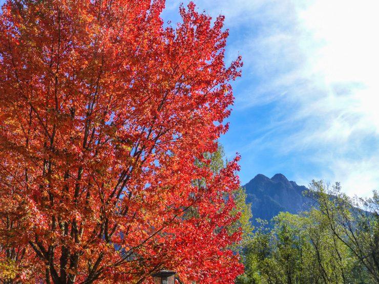 Fall Tree at Rockwood Farm in Snoqualmie, Washington