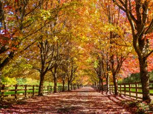 What's Worth Messing Up a Toddler's Schedule? Rockwood Farm's Autumn Entrance