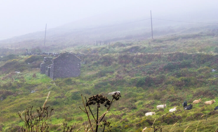 Foggy (yet still pretty!) view along the Ring of Kerry.