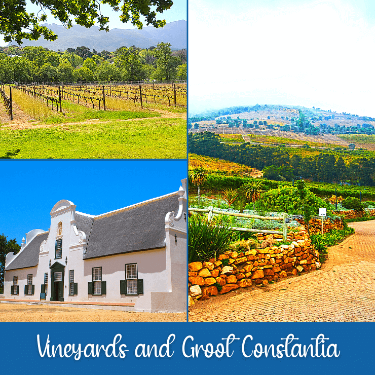 If you love wine and historic buildings don't miss seeing the vineyards and wineries in the Constantia neighborhood of Cape Town, especial the historic Groot Constantia.