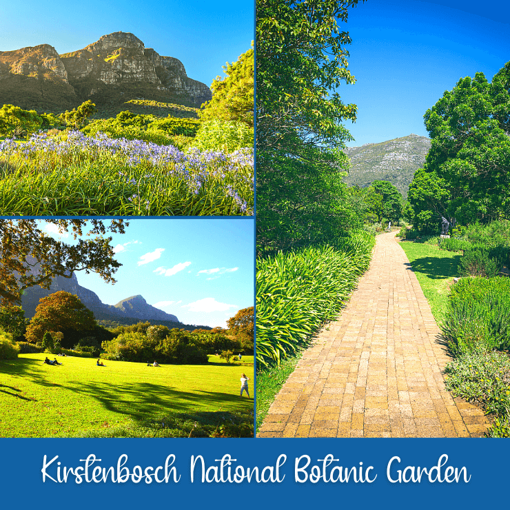 Beautiful flowers, paths, grassy areas, and views abound at Kirstenbosch National Botanic Garden in Cape Town, South Africa.