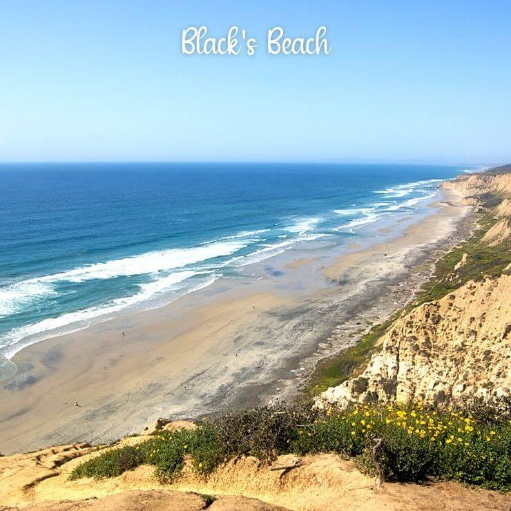 Black's Beach is a hidden gem for surfers and wave watchers in San Diego
